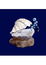 Enfeite-Duo-Soma-Fish-Concha-Branca-para-Aquario